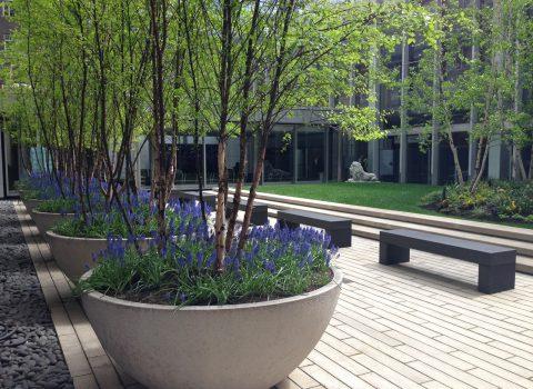 Fleck Courtyard NYU Langone Medical Center