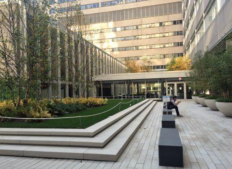 Tisch Courtyard NYU LMC  Planting Design