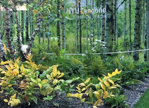 Pop-Up Garden and Screen Tisch Courtyard NYU LMC